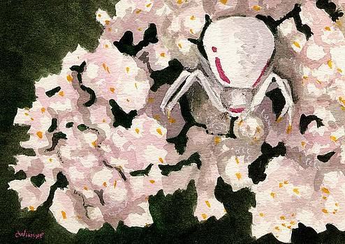White Spider by Christine Winship
