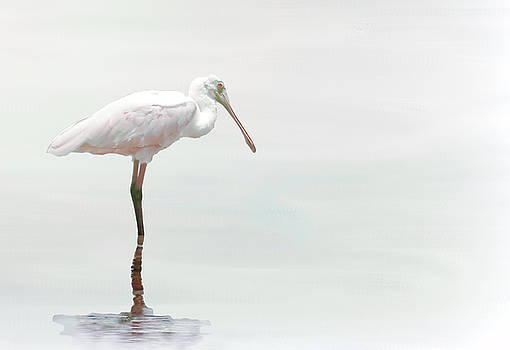White Spoonbill by Rosalie Scanlon