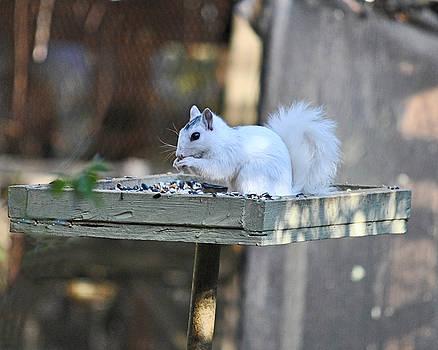 White Squirrel #1 by Wayne Ritt
