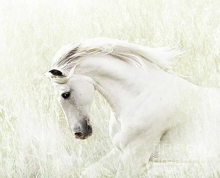 White Stallion by Melinda Hughes-Berland