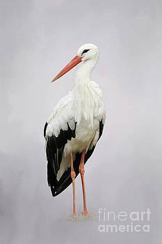 White Stork #2 V2 by Judy Whitton