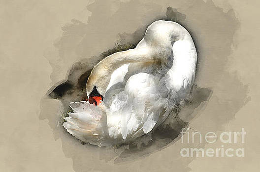 White Swan 1 by Barbara Dudzinska