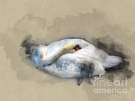 White swan 3 by Barbara Dudzinska