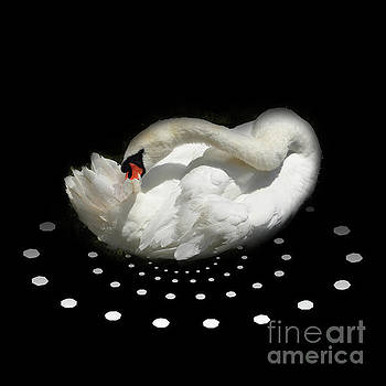 White Swan Dance by Barbara Dudzinska