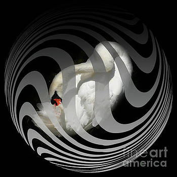 White Swan in a Cage by Barbara Dudzinska