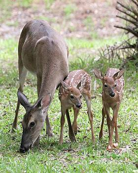 White Tail Family Portrait by Dodie Ulery