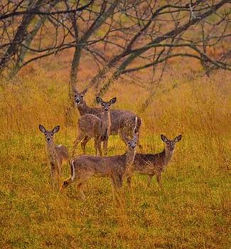 White Tail Family by Tracy Rice Frame Of Mind
