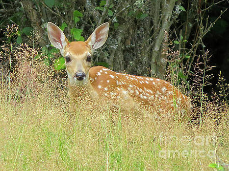 Cindy Murphy - NightVisions - White-Tail Fawn ID