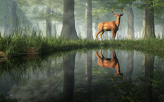 Daniel Eskridge - White Tailed Deer Reflected