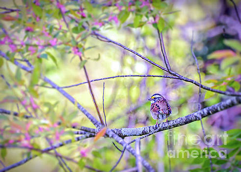 White-throated Sparrow Surrounded By Spring by Kerri Farley