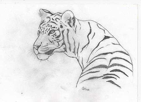White Tiger by Colin Hockless