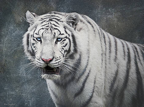 White Tiger by Wim Lanclus