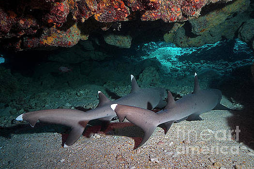White Tip Grotto  by Aaron Whittemore