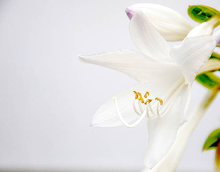 White by Tom McCarthy