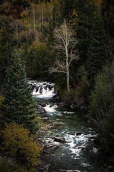 Rick Strobaugh - White Tree by Stream