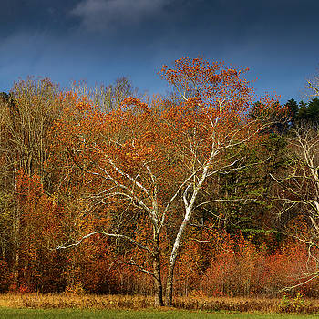 White Tree in Autumn at Cades Cove, Tennessee, the Smokies by Dick Wood