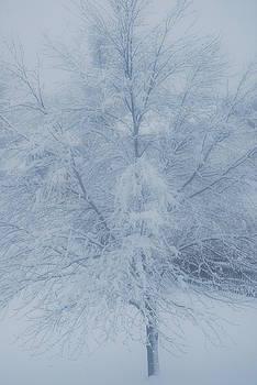 White Tree by Peter  McIntosh