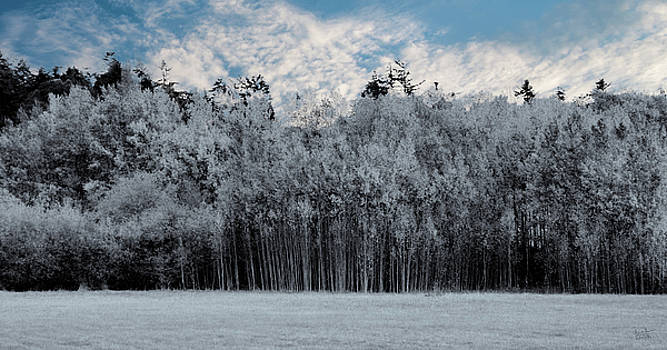 White Trees, Blue Sky by Rick Lawler