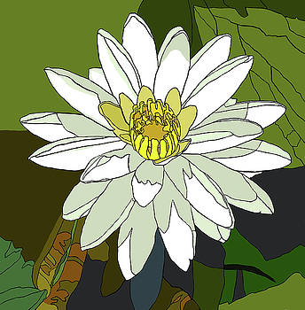 White Water Lily by Jamie Downs