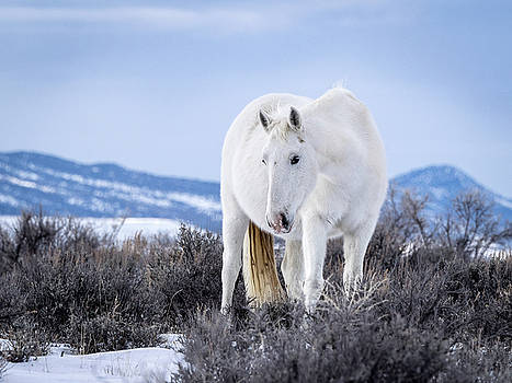 White Wild Horse Mystic of Sand Wash Basin by Nadja Rider