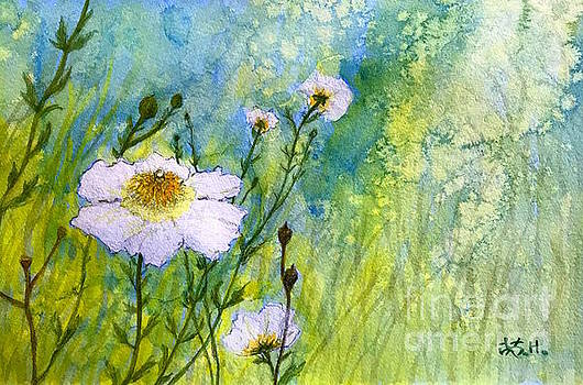 White Wild poppies by Wonju Hulse