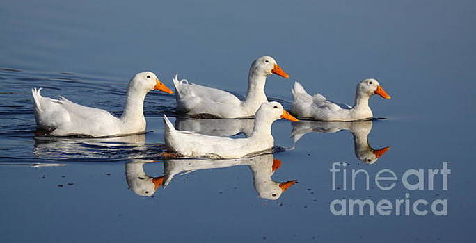 White Wing Formation by Myrna Bradshaw