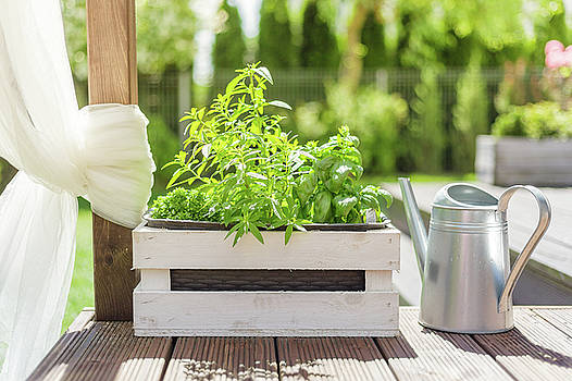 White wooden pot with green herbs on a wooden terrace by Lukasz Szczepanski