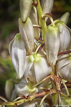 White Yucca Flowers by Debra Forand