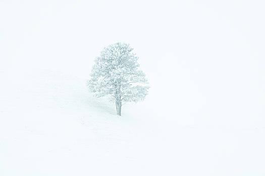 Whiteout by Fiskr Larsen