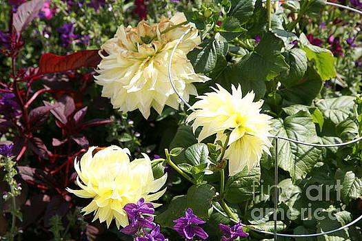 Chuck Kuhn - Whites Flowers