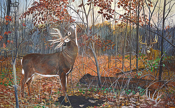 Whitetail at Scrape by Alvin Hepler