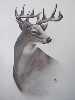 Gilbert Photography And Art - Whitetail Buck
