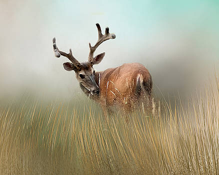 Whitetail Buck in Velvet by TnBackroadsPhotos