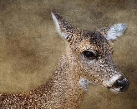Whitetail Doe Portrait by TnBackroadsPhotos