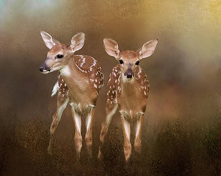 Whitetail Fawn Twins by TnBackroadsPhotos