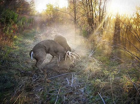 Whitetail Rut by Greg Grupenhof