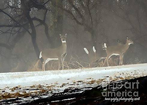 Tami Quigley - Whitetails In The Winter Mist