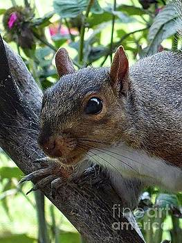 Cindy Treger - Who Goes There? - Gray Squirrel