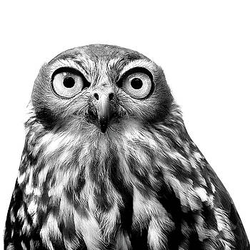 Whoo You Callin A Wise Guy by Marion Cullen
