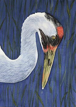 Whooping Crane Portrait by Vicky Lilla