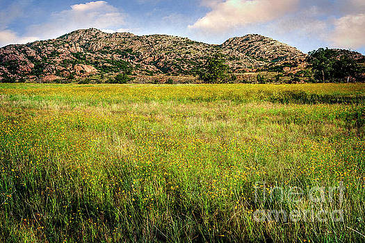 Tamyra Ayles - Wichita Mountain Wildflowers