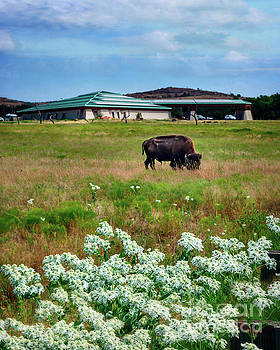 Wichita Mountain Wildlife Reserve Welcome Center Verticle by Tamyra Ayles