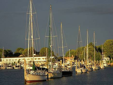 Wickford Harbor by Diane Valliere