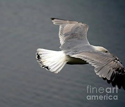 Wide Wings by Irfan Gillani