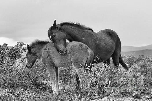 Adam Jewell - Wild Affection Black And White
