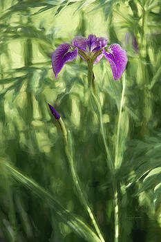 Wild Alaskan Iris II by Penny Lisowski