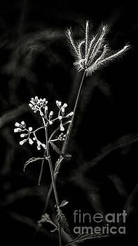 Wild And Beautiful b/w by Ian Gledhill