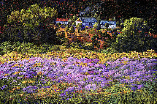 Wild Asters at Picuris by Donna Clair