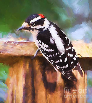 Wild Birds - Downy Woodpecker  by Kerri Farley