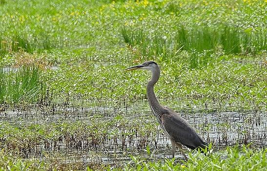 Wild Birds by Martha Kinel